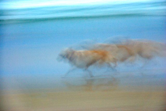 Running Dog print Aldona Kmieć Artist