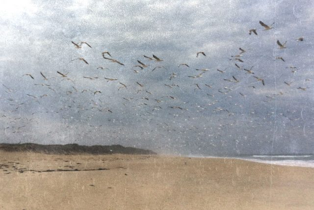 Cape Conran Birds Print East Gippsland Photo Prints Aldona Kmiec Wall Art Prints