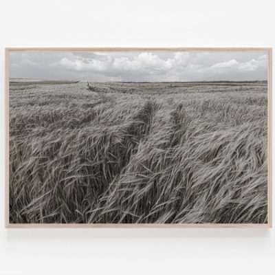 Triticale Fields print wall art Limited Edition Artworks by Aldona Kmiec Artist