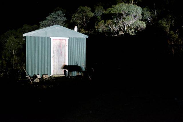 Shadow print husky dog Australia East Gippsland