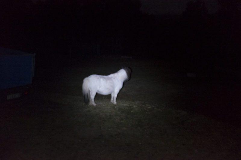 Toby The Haunted white Pony