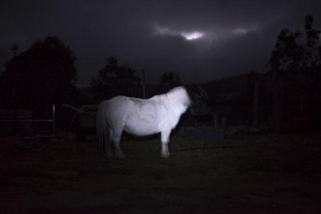 Ghost Pony print Aldona Kmiec Artist