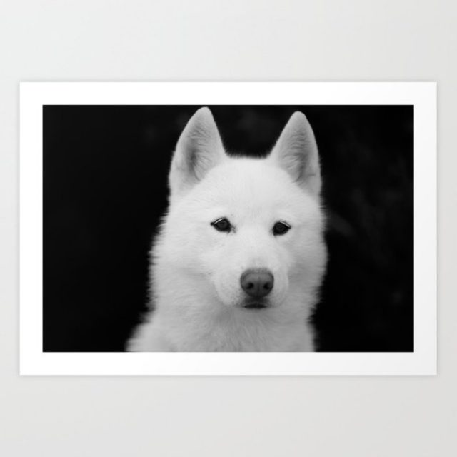 Casper Siberian husky print