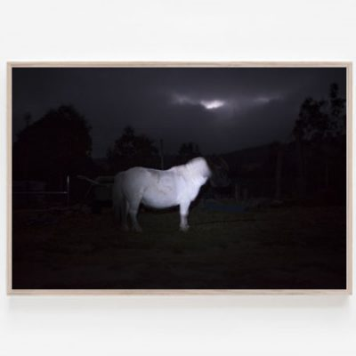 Ghost White Pony print