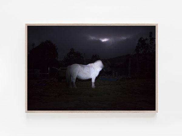Ghost White Pony print