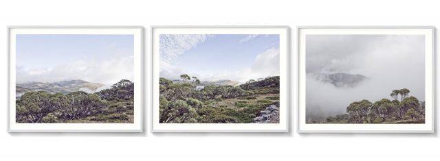 Snow Gums Triptych framed print Kosciuszko National Park triptych artwork Ballarat Artist Aldona Kmiec